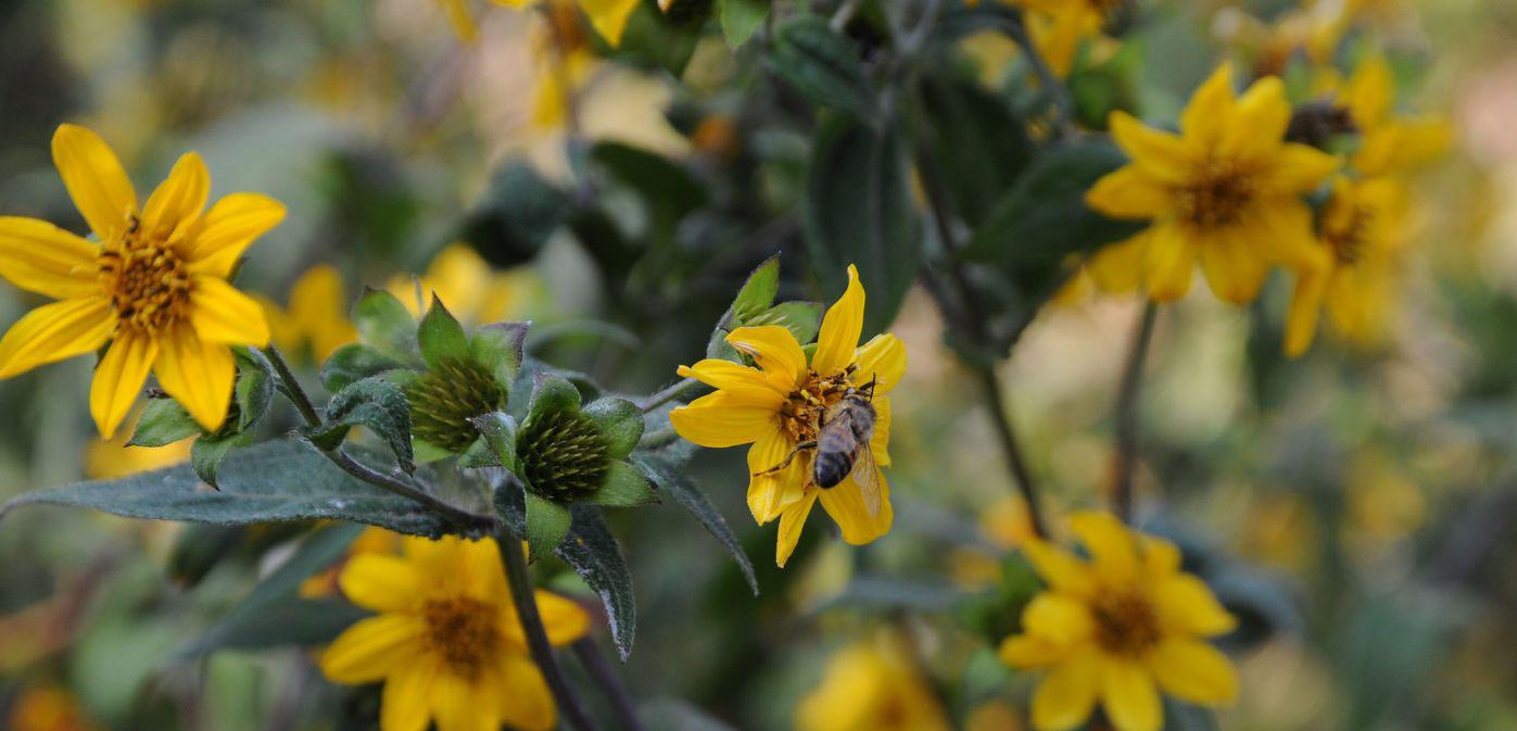 miel-monofloral-biodiversidad-mexico-apiflor